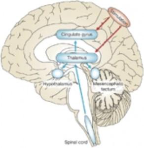Principe d'action à distance de la rTMS par activation des réseaux physiologiques